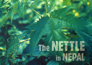 Book cover of The Nettle in Nepal by Susi Dunsmore